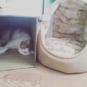 猫到底有没有脑子?