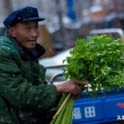 为什么有人宁愿去超市买贵菜,也不买农村老人的菜?
