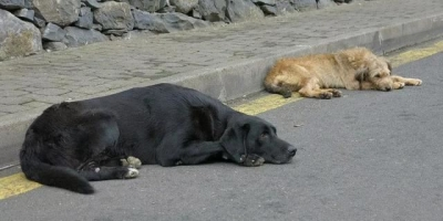 为什么社会上有人卖房省吃省喝也要收养流浪狗?