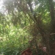 四川省南充市墨蚊是吸血重灾区,白天只能居家,请问该如何治理?