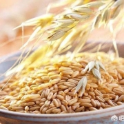 喝燕麦有几大好处?