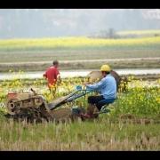 当60后不在了70后老去农村还有多少人种地?
