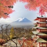 什么是你去了日本后才知道的?