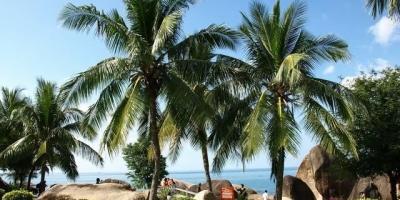 退休后,你会选择去海南过冬吗?