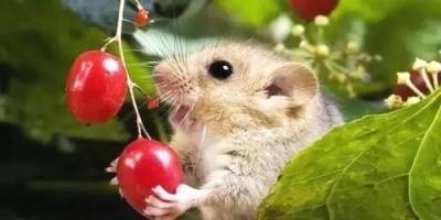 和属鼠的人在一起会幸福吗?