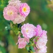 生活中,您喜欢拍摄花的照片吗?