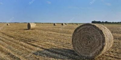 你见过农村最暴利的行业是什么?