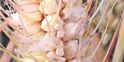 有机肥是用什么做原料的,用起来真的靠谱吗?